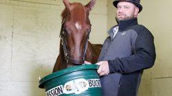 gallery.horse.bucket